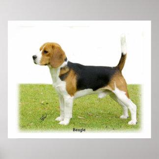 Beagle 9J27D-02 Poster