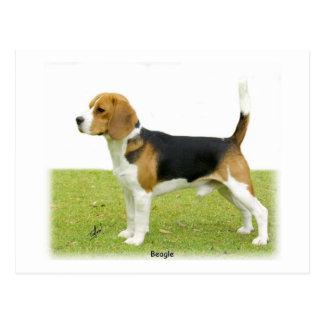 Beagle 9J27D-02 Tarjetas Postales