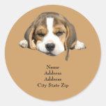 Beagle Address Label Classic Round Sticker