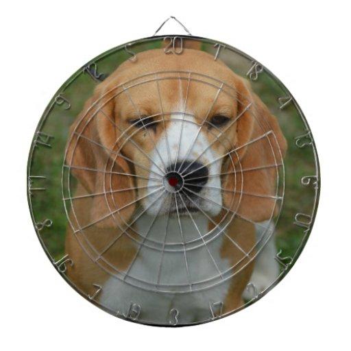 Beagle adorable