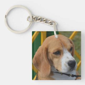 Beagle adorable llavero cuadrado acrílico a una cara