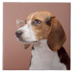 Beagle Azulejo Cuadrado Grande