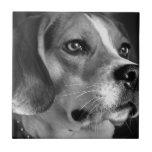 Beagle Azulejo Cuadrado Pequeño