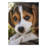 Beagle Baby Dog Greeting Card