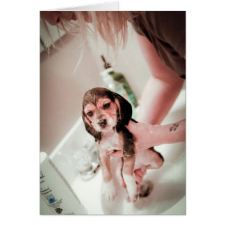Beagle Bathtime del bebé Tarjetas