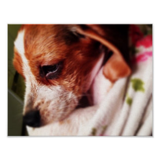 Beagle Bathtime Poster