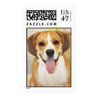 Beagle-Bulldog Mix Photo Postage