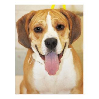 Beagle-Bulldog Mix Photo Postcard