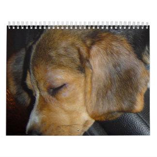 Beagle Calander Wall Calendar