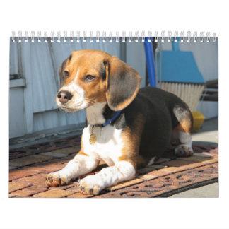 Beagle Calander Calendar