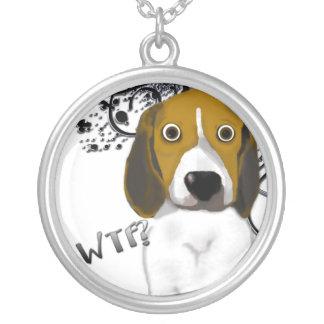 Beagle chocado grimpola