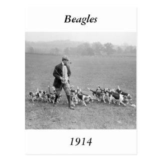 Beagle Club, 1914 Postcard