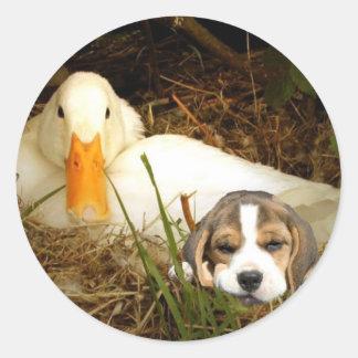Beagle con el pegatina del pato