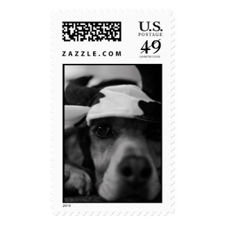 Beagle Cow Postage Stamp
