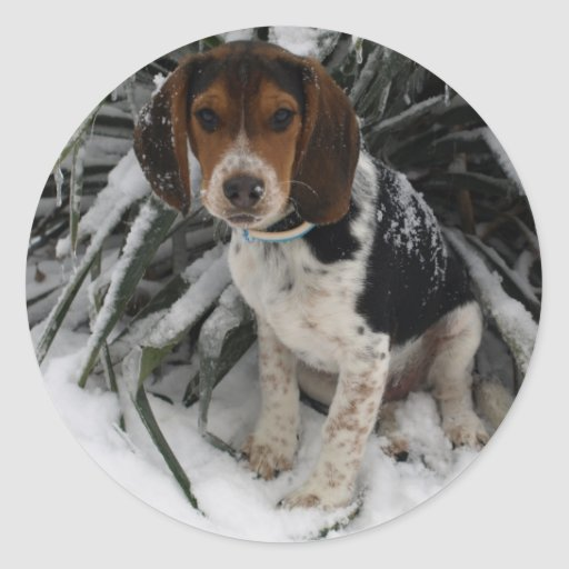 Beagle de la nieve - invierno Snoopy lindo del Pegatina Redonda