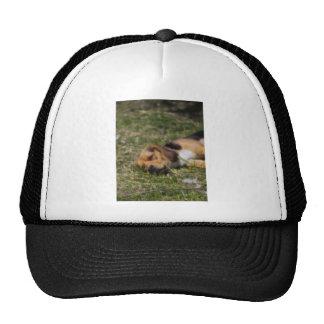 Beagle de Sleepie Gorro