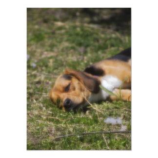 Beagle de Sleepie Comunicados Personales
