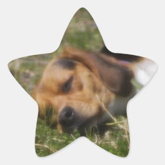 Beagle de Sleepie Calcomanía Forma De Estrella