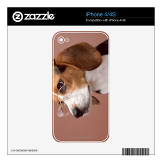 Beagle Decals For The iPhone 4S