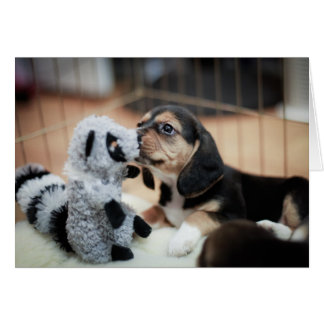 Beagle del bebé y su nuevo juguete tarjeta de felicitación