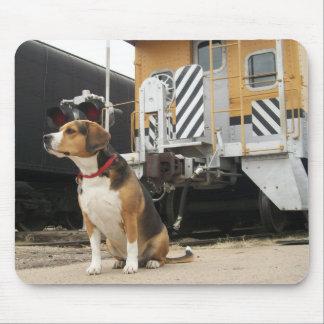 Beagle del tonelero que espera en el depósito de t tapetes de ratón