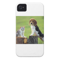 Beagle Dog And Grey Tabby Kitten iPhone 4 Case