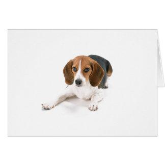 Beagle Dog Greeting Card