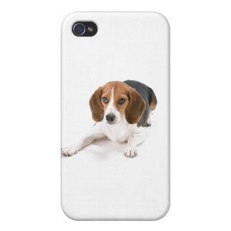 Beagle Dog iPhone 4 Case