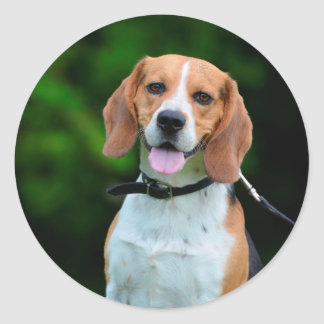 Beagle dog lovers cute photo round stickers