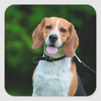 Beagle dog lovers cute photo square stickers