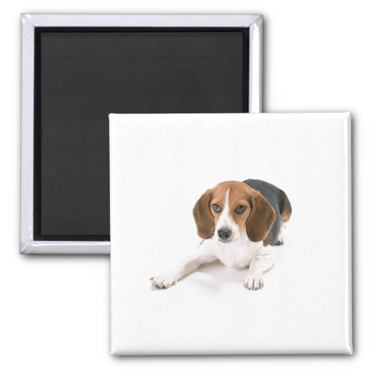 Beagle Dog Magnet