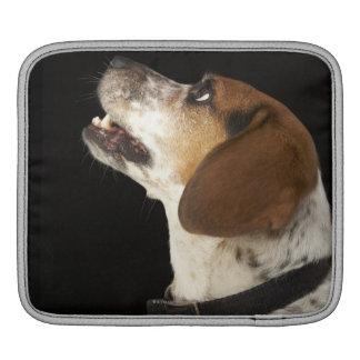 Beagle dog with black collar profile iPad sleeve