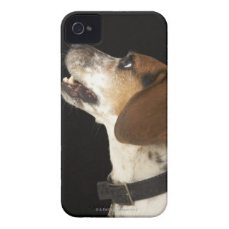 Beagle dog with black collar profile iPhone 4 case