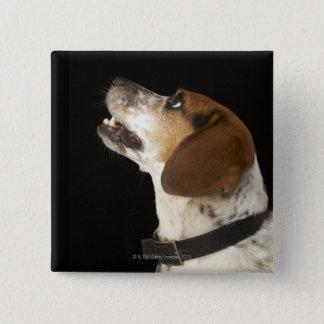 Beagle dog with black collar profile pinback button