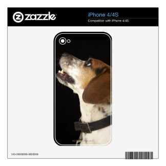 Beagle dog with black collar profile skins for iPhone 4
