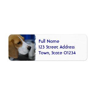 Beagle dulce etiqueta de remite