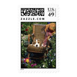 Beagle en franqueo de la silla de jardín