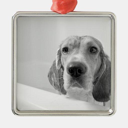 Beagle en la bañera adorno navideño cuadrado de metal