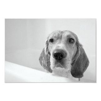 Beagle en la bañera invitacion personal