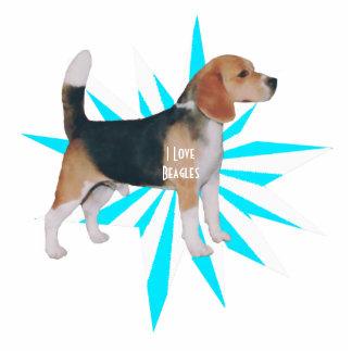 Beagle en molinillo de viento de la turquesa llavero fotográfico