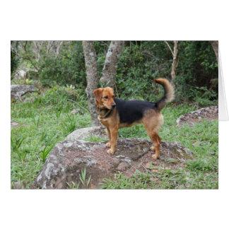 Beagle en su trono tarjeta de felicitación