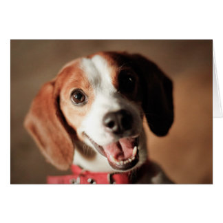 Beagle Freedom Greeting Card
