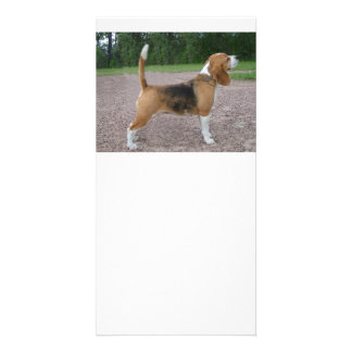 beagle full 2.png photo card