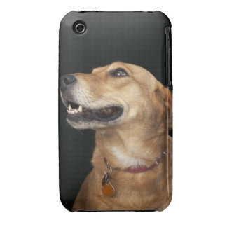 Beagle Golden Lab Mix looking to the side iPhone 3 Case-Mate Cases