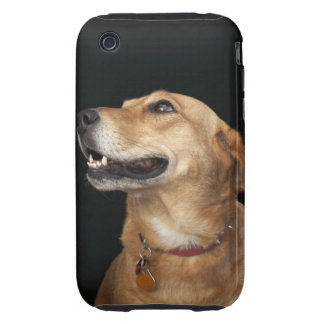 Beagle Golden Lab Mix looking to the side Tough iPhone 3 Cases