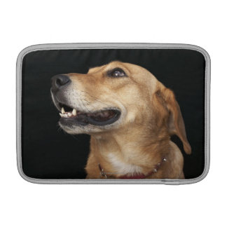Beagle Golden Lab Mix looking to the side MacBook Air Sleeve