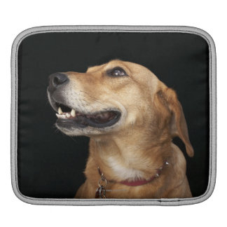 Beagle Golden Lab Mix looking to the side Sleeve For iPads