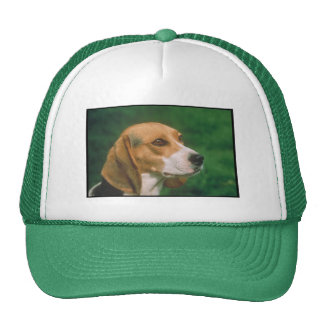 Beagle Gorra