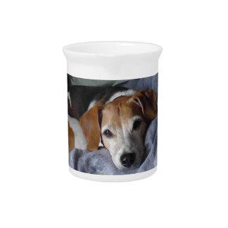 Beagle-Harrier Dog Pitcher