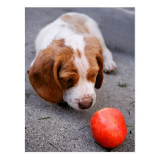 Beagle - Hound dog puppy Postcard